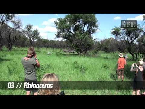 Etelä-Afrikka – viisi bongattavaa villieläintä
