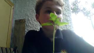 adam likes talking to plants, theyre his only friend.. xox
