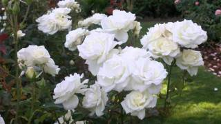 My Choice - Nana Mouskouri: White Roses of Corfu