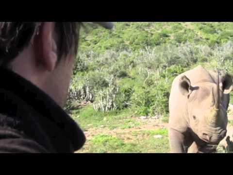 Black Rhino – Kwandwe Private Game Reserve – South Africa