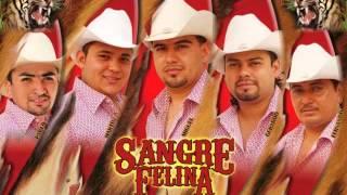 """SANGRE FELINA """"TITULO DE SANGRE"""""""