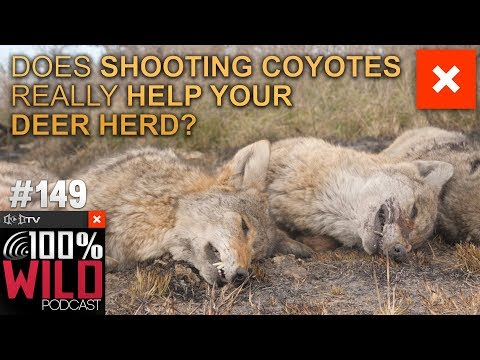 Does Shooting Coyotes Really Help Your Deer Herd?