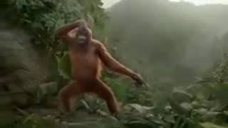 chimpanzé dansando fanque