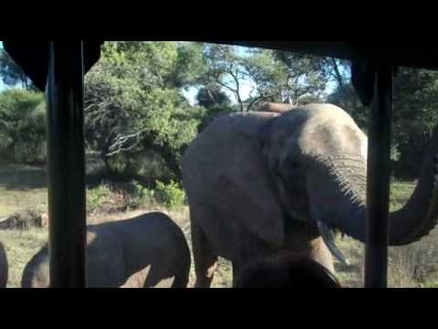Mark and Sylv in South Africa – Part 2 – Tea, Tickets and Elephants!