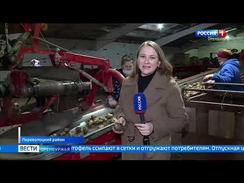 К уборке картофеля приступили в Оренбургской области
