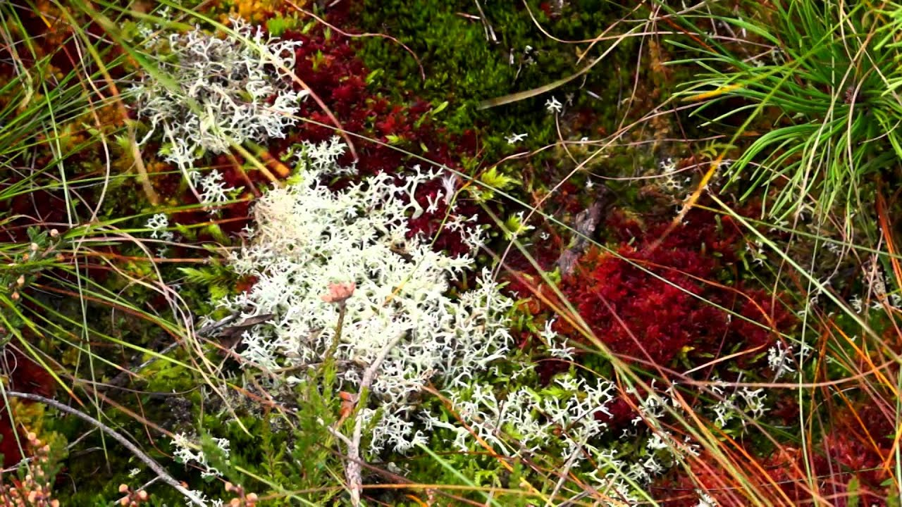 Chapter 1 – What is a Bog and Why Should We Conserve it?