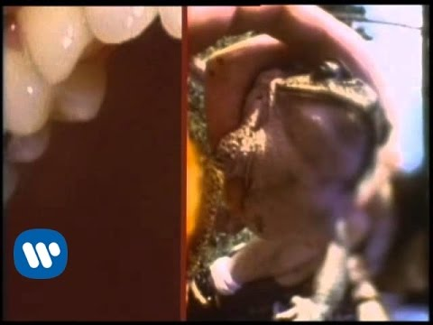 the-flaming-lips-frogs-official-music-video-flaminglips
