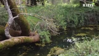 Val d'Ifrane : le confinement, un répit pour les écosystèmes menacés ?