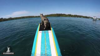 My cat rides with me while I paddle my surfboard
