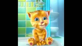 No me quiero bañar / gatito