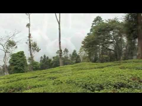 Rare Tea Republic: First Flush Nepal