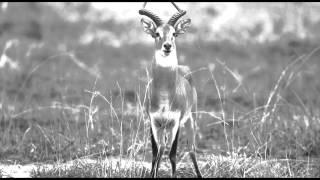 Piezo - Antelope Swing (Forthcoming Subaltern)
