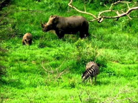 the safari