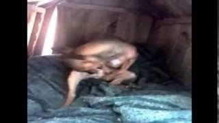 Cachorro do Rogério Skylab - o pau é MEU!
