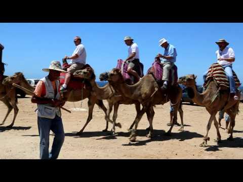 2012 07 Morocco   camel race