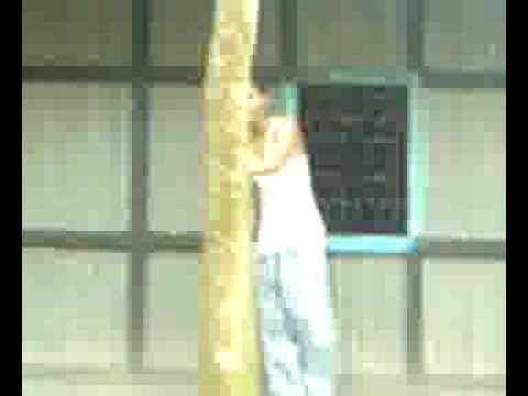 climb a tree for star fruit