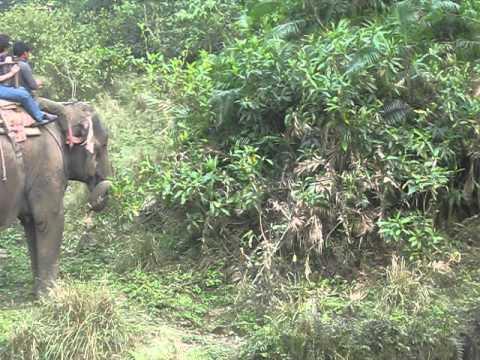 http://trekkinginmountain.com/bardia-jungle-safari