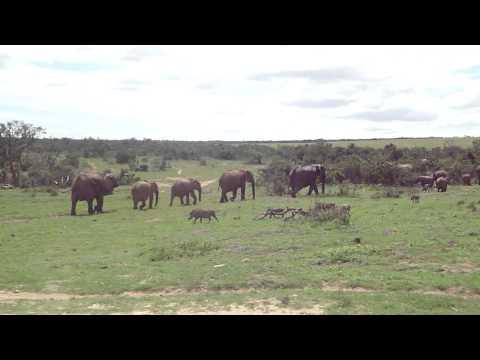 Addo National Park South Africa game drive safari Elephants & Warthog