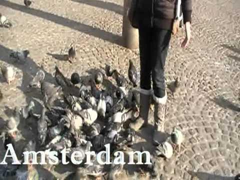 Studytrip filmpje 2 – Groeten uit Nederland