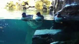 Penguins live in Orlando Florida