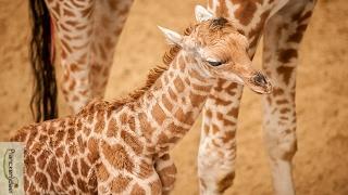 It's a boy! En we zoeken een naam. Help ons!