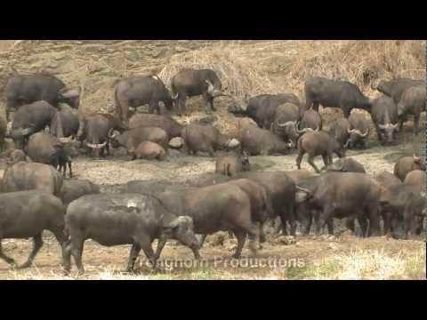 Kruger National Park Stock Video Footage