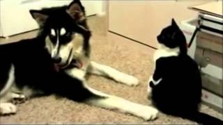 #搞笑动物!猫咪和狗狗爆笑打架  频道:人与自然 动物趣事 在线观看 PPS爱频道