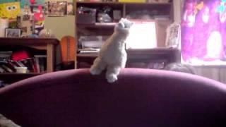 Chloe the Alpaca - Sings the llama song!