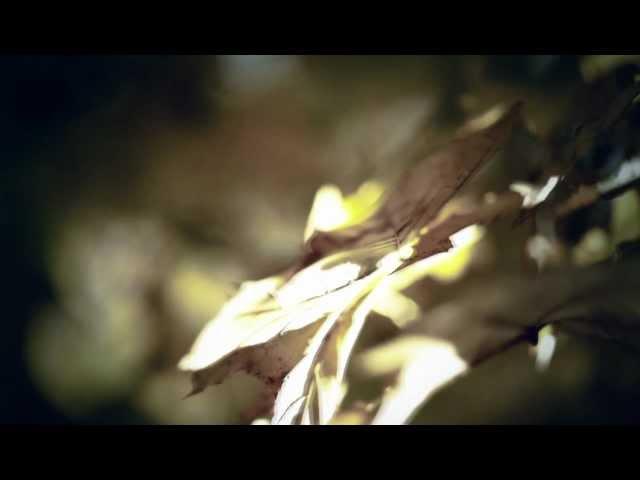 Videoclip oficial de 'Walk', de Ludovico Einaudi.