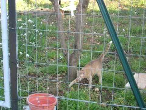 Recinzione Giardino Per Gatti.Come Rendere Il Giardino A Prova Di Gatto Animali Dal Mondo