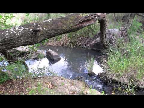 Cradle Forest Camp and Reserve (Summer) – Johannesburg