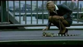 iguana - mauro picotto