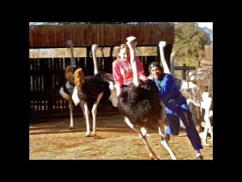 An Adventure at an Ostrich farm