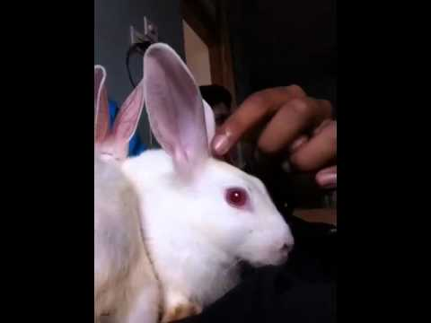 Bangali vid blog-funny bunnies