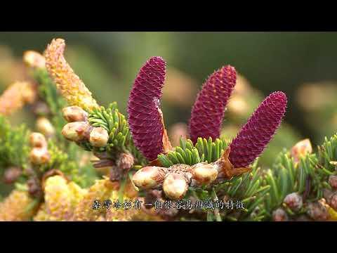 合歡越嶺—合歡山生態之旅(完整版23分鐘)