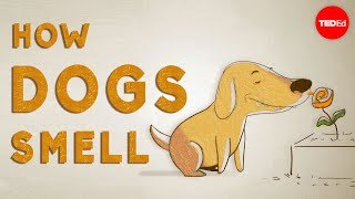 """How do dogs """"see"""" with their noses? - Alexandra Horowitz"""