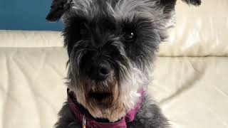 Pluto addresses the internets in this time of crisis...