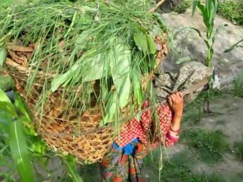 2012 Chalisegaon 9 (Nepal) – Women Carrying Baskets