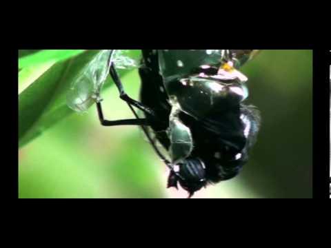 森活萬象生態解碼 紫斑蝶 - YouTube