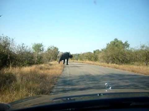 Kruger Park, South Africa – African Elephant Encounter