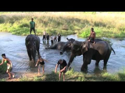 Bathing Elephants, Chitwan Nepal