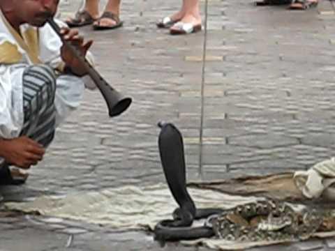Moroccan Snake Charmer