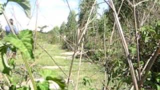 VIDEO   PROMISSÃO  20 A 24  11   2008 359