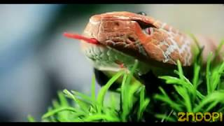 Awesome! Remote Control Snake