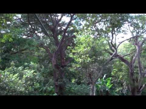 Zip Line Mombacho Volcano Granada, Nicaragua 2011-11-15 15:38:20