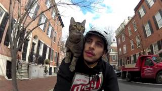 Een fietstochtje met de kat