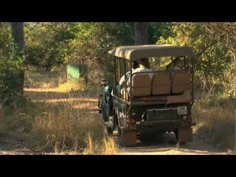 On Safari with the Bushcamp Company, South Luangwa National Park, Zambia, Africa