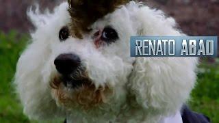 RENATO - Adios Amor (Yo me llamo Américo) VIDEO OFICIAL D.R.A.