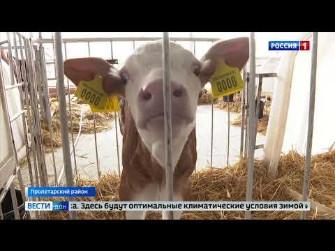 В Пролетарском районе  работает инновационная молочная ферма
