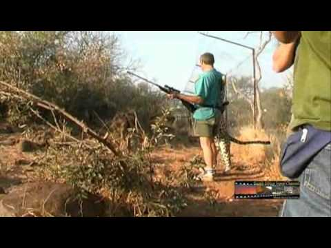 Leopard – South Africa Travel Channel 24